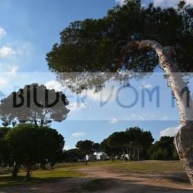 Bilder Golf | Golfplatz Bilder Villamartin, Spanien