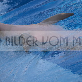 Delfin Bilder | Foto verspielter Delfin 6 Spanien