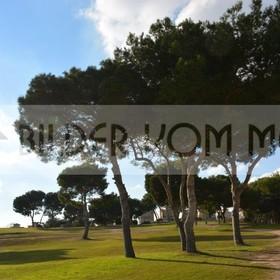 Bilder Golf | Golfplatz Villamartin unter Pinien