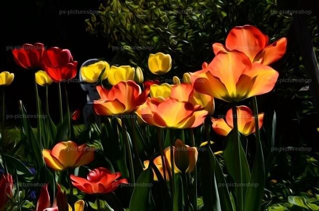 blumen flower (2) | Fauna, Flora, flower, blumen, 動物、植物、フラワーズ, 動物相、植物相
