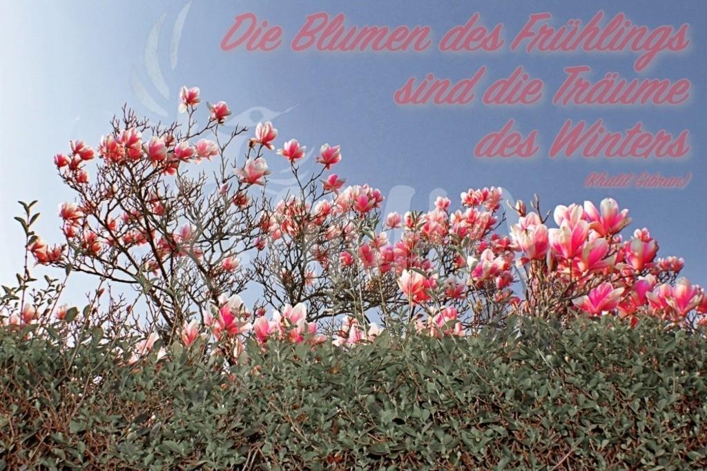 Zitat des Monats #7 April 2019 | Die Blumen des Frühlings sind die Träume des Winters (Khalil Gibran)