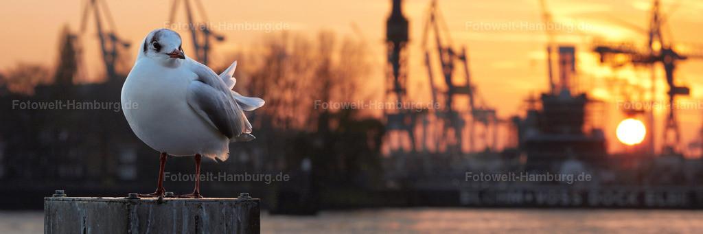 11691294 Sonnenuntergang Mit Möwe