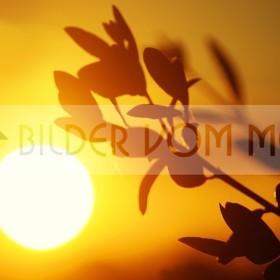 Bilder Sonnenuntergang | die letzten Minuten Tag