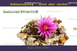Kakteentasse Mammillaria wrightii  SB 94  Santa Fe Co_ NM